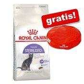 10 kg Royal Canin + Royal Canin jastučić za mačku - Kitten
